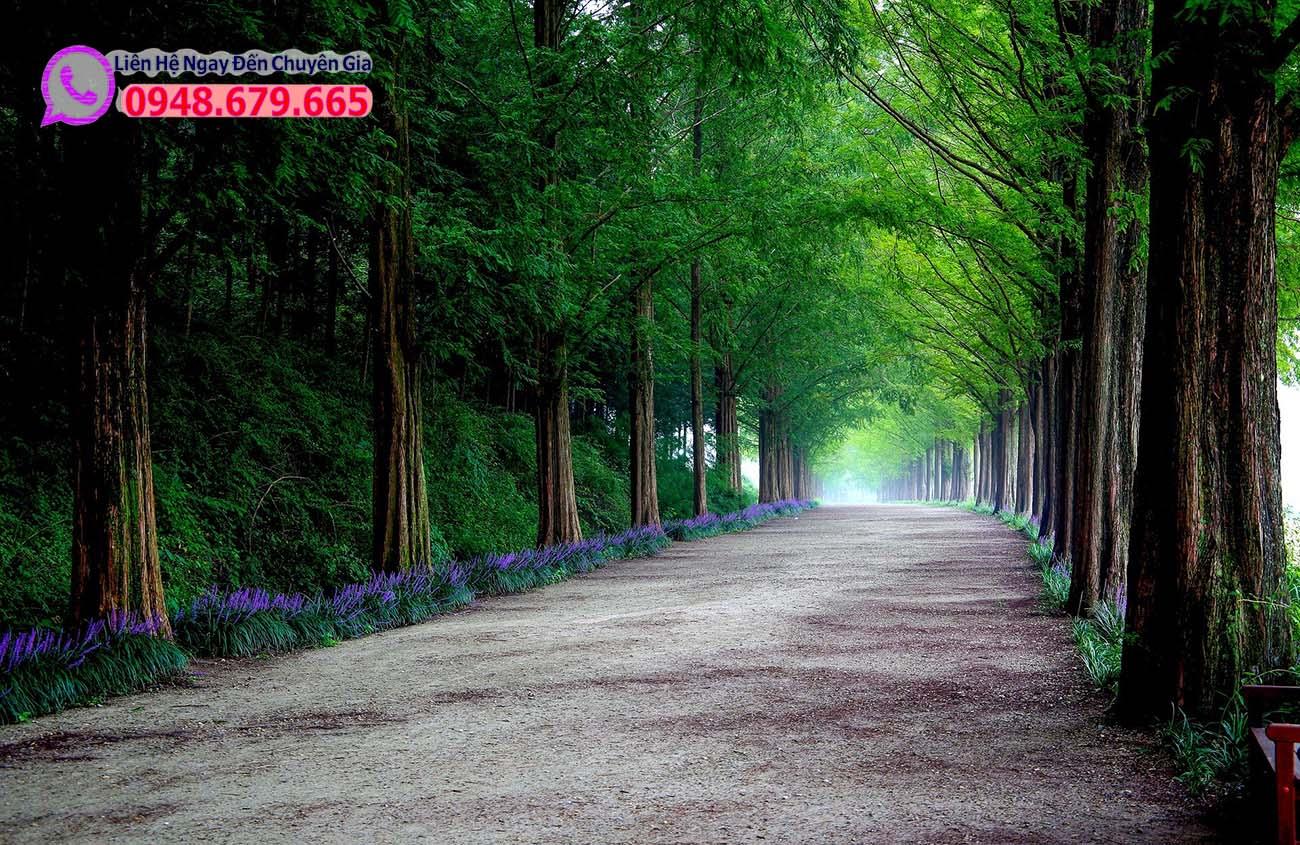 Con đường Damyang