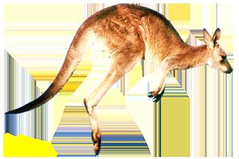 Kangaru Úc