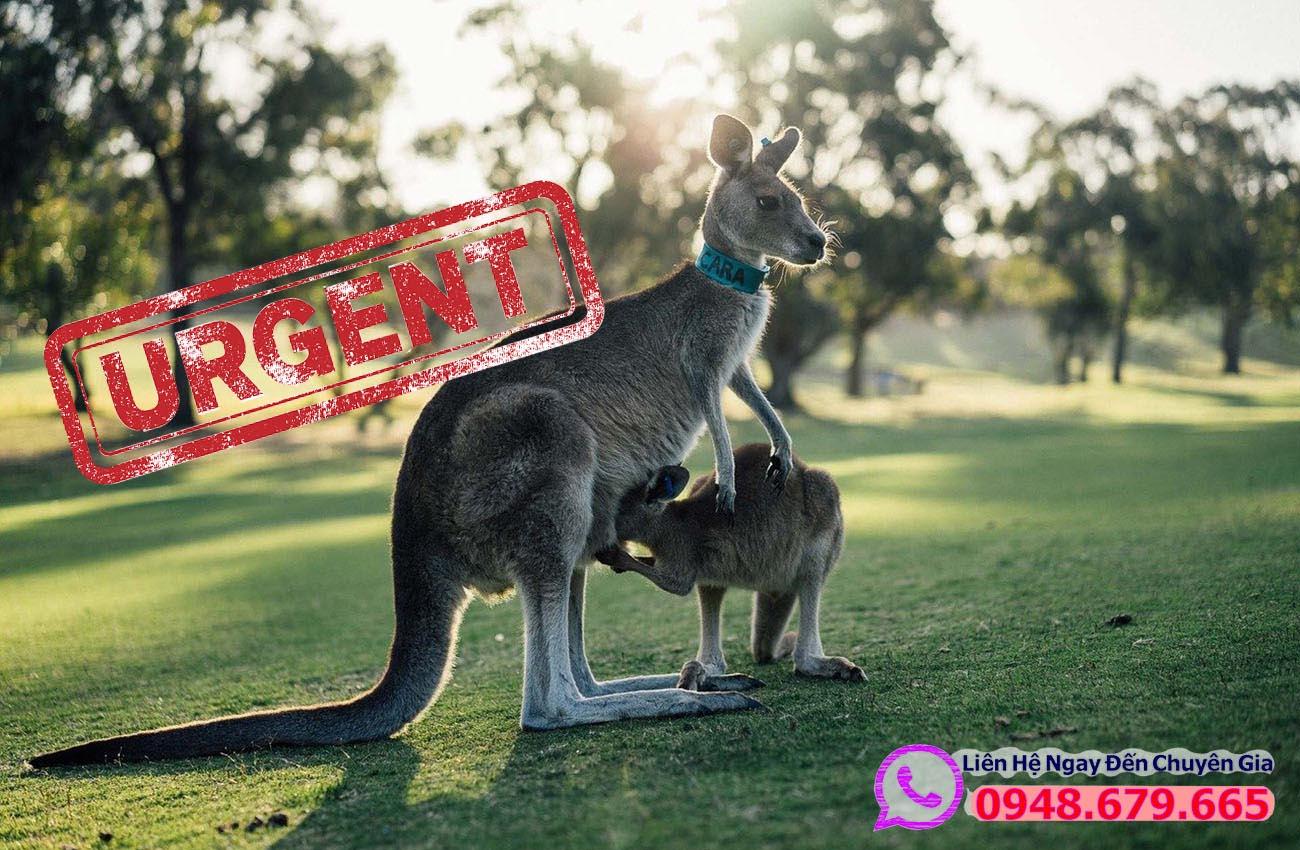 Làm Visa Úc diện khẩn