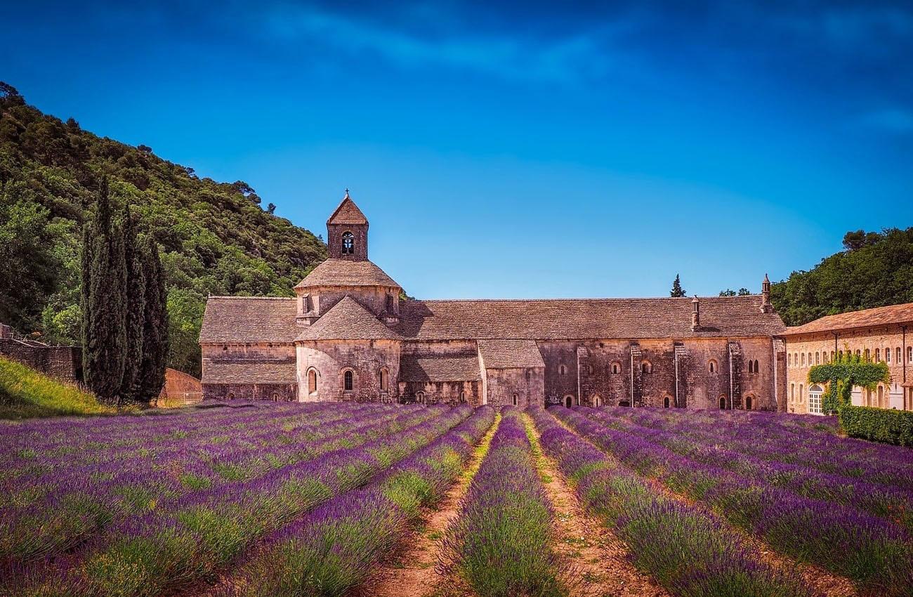 Cánh đồng hoa Lavender nước pháp