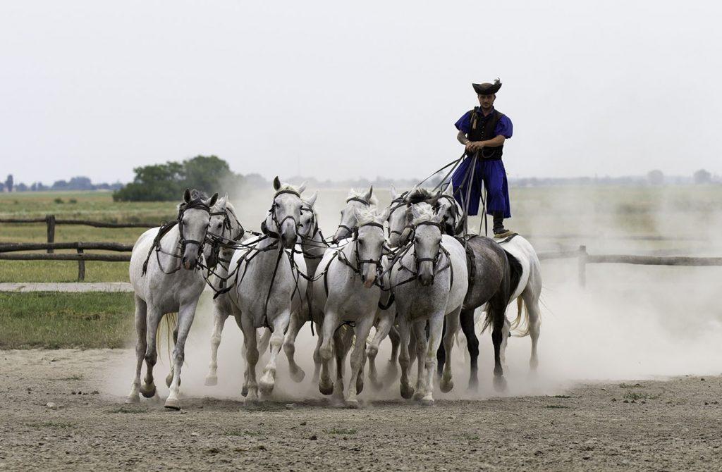 Trang trại ngựa Puszta